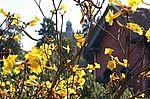 Flores do jardim da Fiocruz