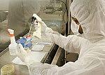 Adição da suspensão bacteriana em placas de Petri