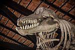 Esqueleto de baleia orca