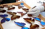 Taxonomia de insetos