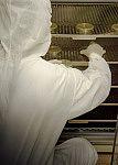 Placas para crescimento microbiana em estufa