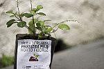 Muda de planta