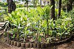 Plantas tóxicas.
