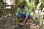 Pessoa plantando.