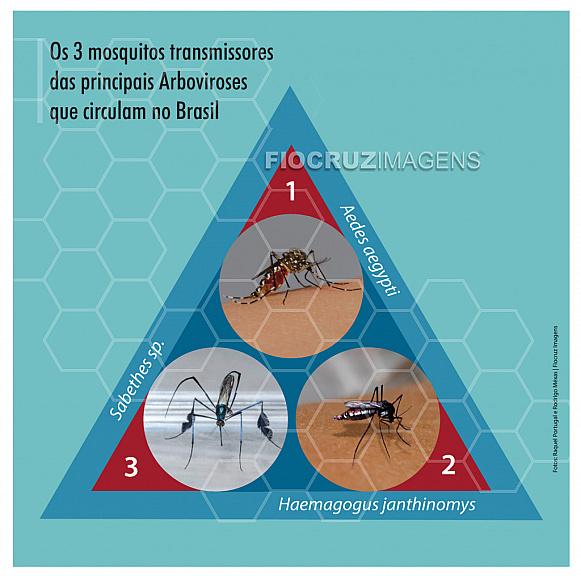 Mosquitos transmissores de Arboviroses no Brasil