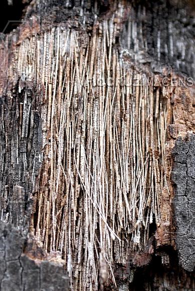 Tronco de árvore