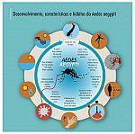 Desenvolvimento, características e hábitos do Aedes aegypti