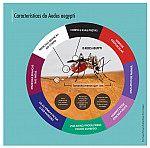 Características do Aedes aegypti