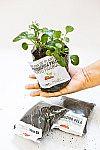 Compostos orgânicos e muda de planta