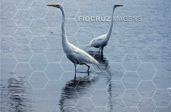 Fauna nativa