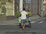 Transporte de hortaliças.