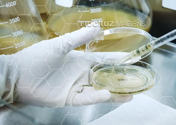 Placas de Petri e pipeta