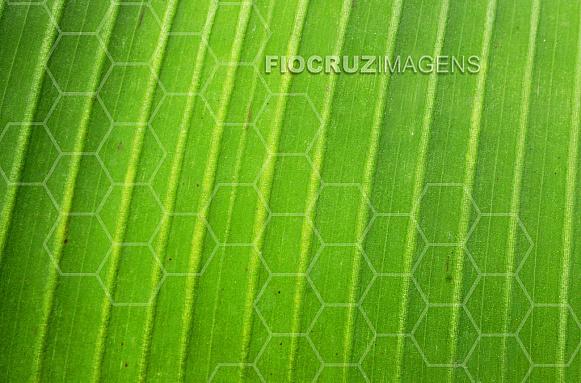 Textura de planta