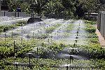 Irrigação.